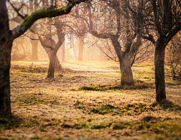 Nákup ovocných stromů: Výběr vám usnadní několik praktických rad